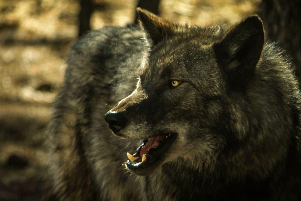 کابوس حمله حیوانات وحشی