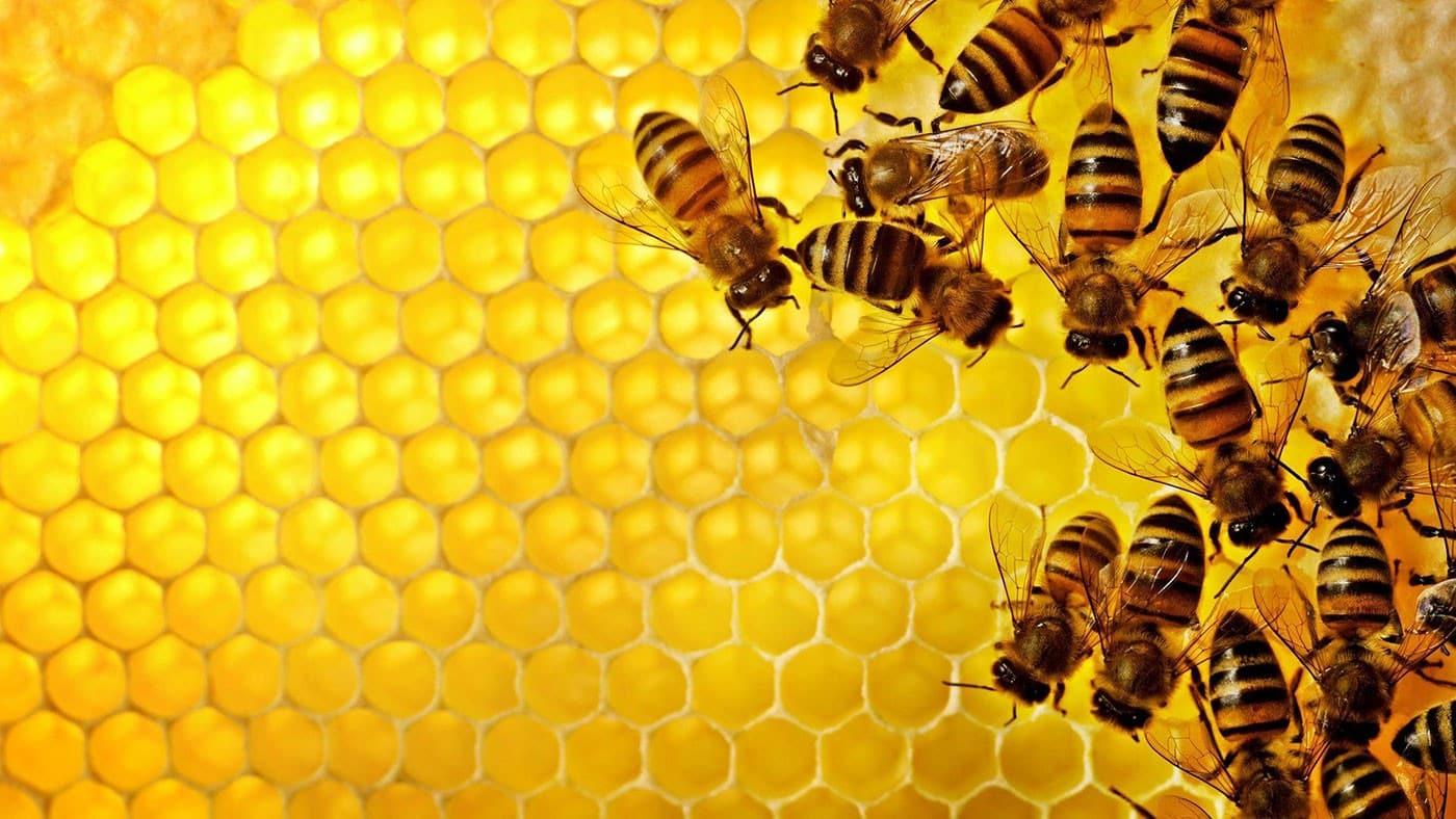 تصویر از عسل طبیعی در طبیعت بکر