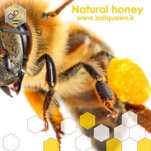 عسل طبیعی بال کوئین